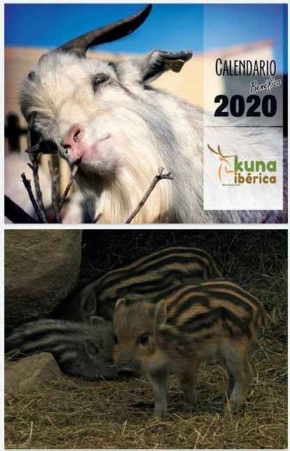 calendario Kuna ibérica centro de fauna