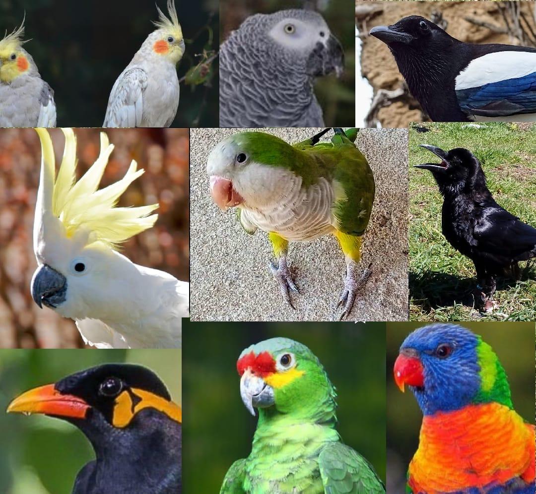 Centro de fauna Kuna ibérica. Aves exóticas